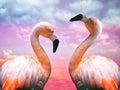 Two flamingos Royalty Free Stock Photo