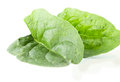 Two fleshy spinach leaves on the white background Royalty Free Stock Images