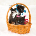 Two fluffy little kittens Royalty Free Stock Photo