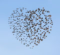 Two flying flock birds in shape of heart Stock Photography