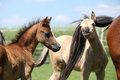 Two foals of welsh mountain pony on pasturage in summer Stock Photography