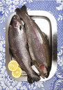 Two fresh rainbow trouts on a stainless steel tray garnished with slices of lemon raw fish ready for the kitchen Royalty Free Stock Image