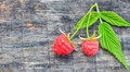 Two fresh raspberries with with stems and leaves on wooden background Royalty Free Stock Photo