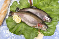 Two freshly caught trouts on a rhubarb leaf served wooden board with crusty bread blue tablecloth with embroidered flowers Royalty Free Stock Photos