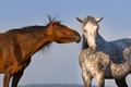 Two funny horse Royalty Free Stock Photo