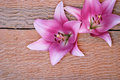 Two gentle pink lilies on a rough wooden background Royalty Free Stock Photography
