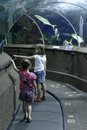 Two girls visiting aquarium young in singapore studying fish through glass walls from the tunnel through the facility Stock Photo