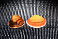 Two glowing shells on a black structured background with honeycomb pattern Royalty Free Stock Photos