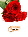 Two gold wedding bands beside a roses. Stock Photo
