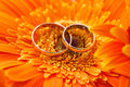 Two gold wedding rings background orange gerbera Stock Image