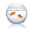 Two goldfish in an aquarium Royalty Free Stock Image