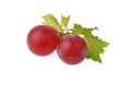 Two grape Royalty Free Stock Photography
