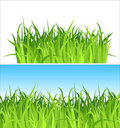 Two grass backgrounds / vector Stock Photo