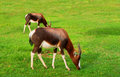 Two grazing antelopes after rain Royalty Free Stock Photo