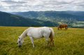 Two grazing horses Royalty Free Stock Photo