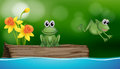 Two green frogs at the pond scene Royalty Free Stock Photo