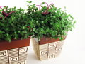 Two Green Indoor Pot Plants Royalty Free Stock Photo