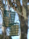 Two Bird Feeders Filled with Suet Cakes Awaiting the Arrival of the Birds