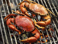Two grilled crabs. Royalty Free Stock Photo