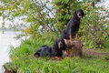 Two gun dog near to trophy, outdoors Royalty Free Stock Images