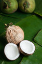 Two halfs of coconut Royalty Free Stock Photo