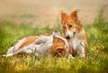 Two happy dog laying on the grass Stock Photo