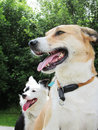 Two happy sitting dogs  (1) Royalty Free Stock Photo