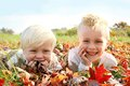 Two happy young children playing outside in fall leaves a portrait of smiling a pile of red and yellow fallen maple tree on an Royalty Free Stock Images