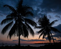 Two Hawaiian Palm Trees at Sunset on a Beach Stock Photos