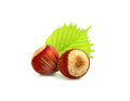Two hazelnuts with leaves. Royalty Free Stock Photo