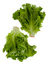 Two Heads Of Lettuce Stock Photo
