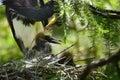 Two Heron Chicks Royalty Free Stock Photo