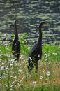 Two Herons by a pool Royalty Free Stock Photo