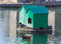 Two home for waterfowl in zoo summer day Stock Images