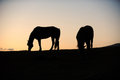 Two horse in the grassland at sunrise Royalty Free Stock Images