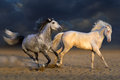 Two horse play Royalty Free Stock Photo