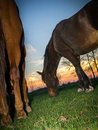 Two horses against sunset an orange and blue glowing sky Royalty Free Stock Photos