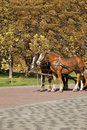 Two horses  in autumn Royalty Free Stock Photo