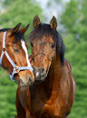 Two horses comminicating to each other Stock Photos