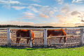 Two horses in a corral on spring morning Royalty Free Stock Photo