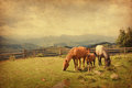 Two horses and foal in meadow photo retro style paper texture Royalty Free Stock Photo