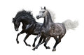 Two horses gallop on white background isolated Stock Photography