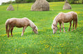 Two horses graze in a meadow with haystacks Stock Photography