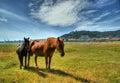 Two horses grazing in Viana do Castelo Royalty Free Stock Photo