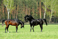 Two Horses in Green Meadow Royalty Free Stock Photo