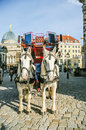 Two horses harnessed to the carriage dresden germany Stock Photos