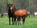 Two horses in love Royalty Free Stock Photo