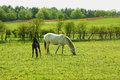 Two horses, a mare and a colt in Spring Royalty Free Stock Photo