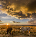 Two horses on meadow at colorful sunset Royalty Free Stock Photo