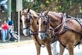 Two Horses in Parade Royalty Free Stock Photo